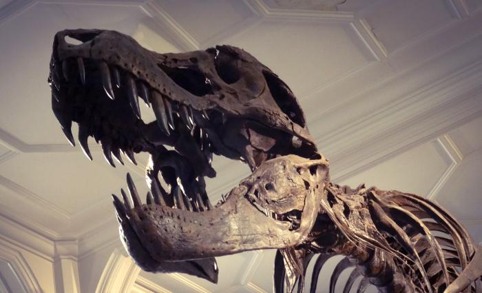 ex-Banker bringt Fossilien als Kunst auf den Markt