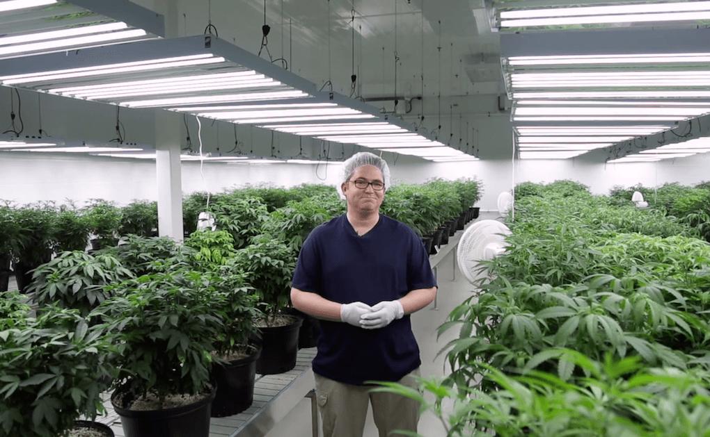 Umsätze von Cannabis in den USA explodieren seit Legalisierung. (Foto: Screenshot)