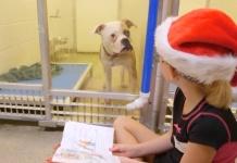 Kinder helfen Hunden mit Vorlesen im Tierheim