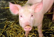 Schweinefleisch verschwindet aus deutschen Schulen und Kitas