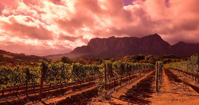 Wein-Tourismus in Südafrika profitiert vom schwachen Rand