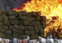 Marihuana-Legalisierung ruiniert die Drogenkartelle . (Foto: Claudio Toledo)