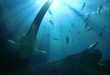 So werden die letzten wilden Meeresgebiete beschützt. (Foto: FunGi_ (Trading))