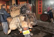 Chinas Hundefleisch-Festival: Gegner fahren schwere Geschütze auf (Foto: Youtube/ Lord Spoda)