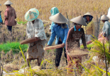 Nobelpreisträger Greenpeace GMOs
