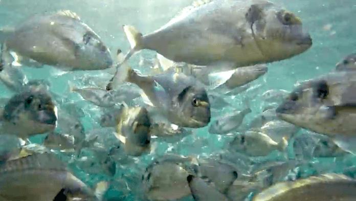 Aquakultur Verschmutzung