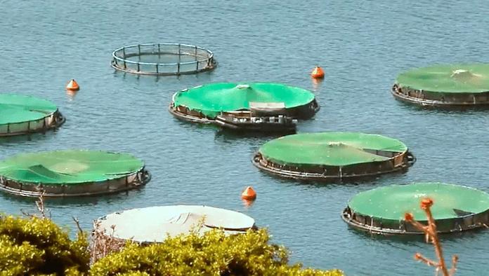 Aquakultur gesunder Fisch
