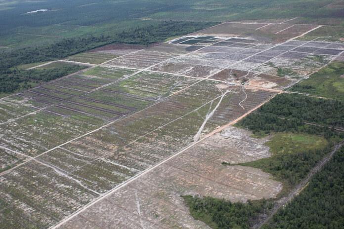 Norwegen: 400-Millionen-Fonds soll Waldzerstörung stoppen (Foto: glennhurowitz)