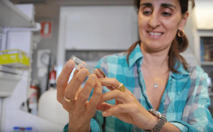 Diese Raupen fressen Plastik, und zwar super schnell (Foto: N24, Youtube)