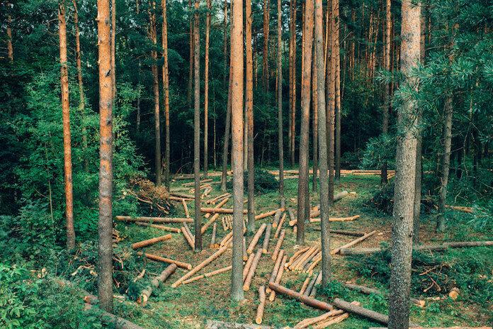Umweltschutz: Norwegen droht Brasilien mit Milliarden-Strafe (Foto: barnimages.com)